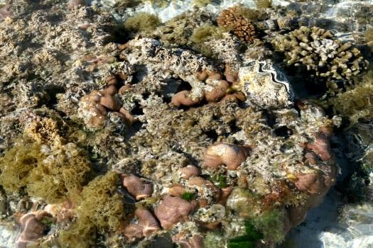 Reef_9517